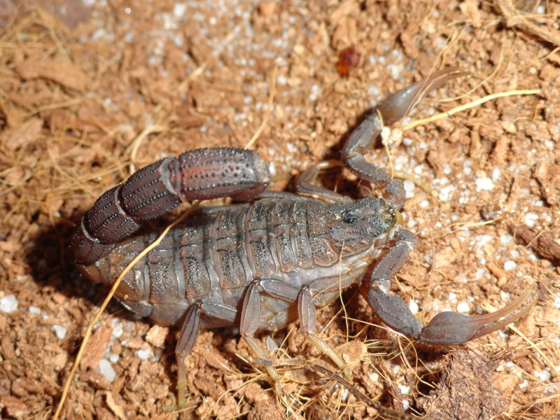 Envyizm's scorpion pictures - Page 4 Dsc00117