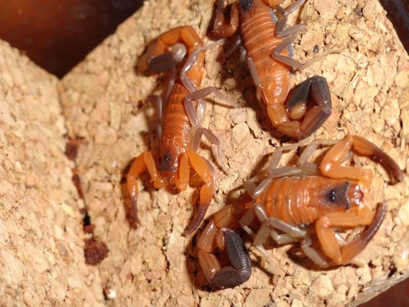 Envyizm's scorpion pictures - Page 4 Dsc00119