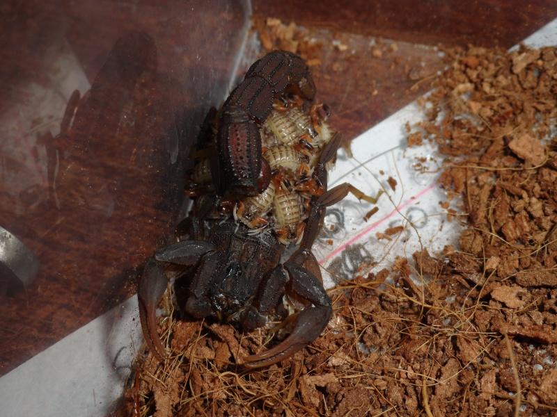 Envyizm's scorpion pictures - Page 4 Dsc00122