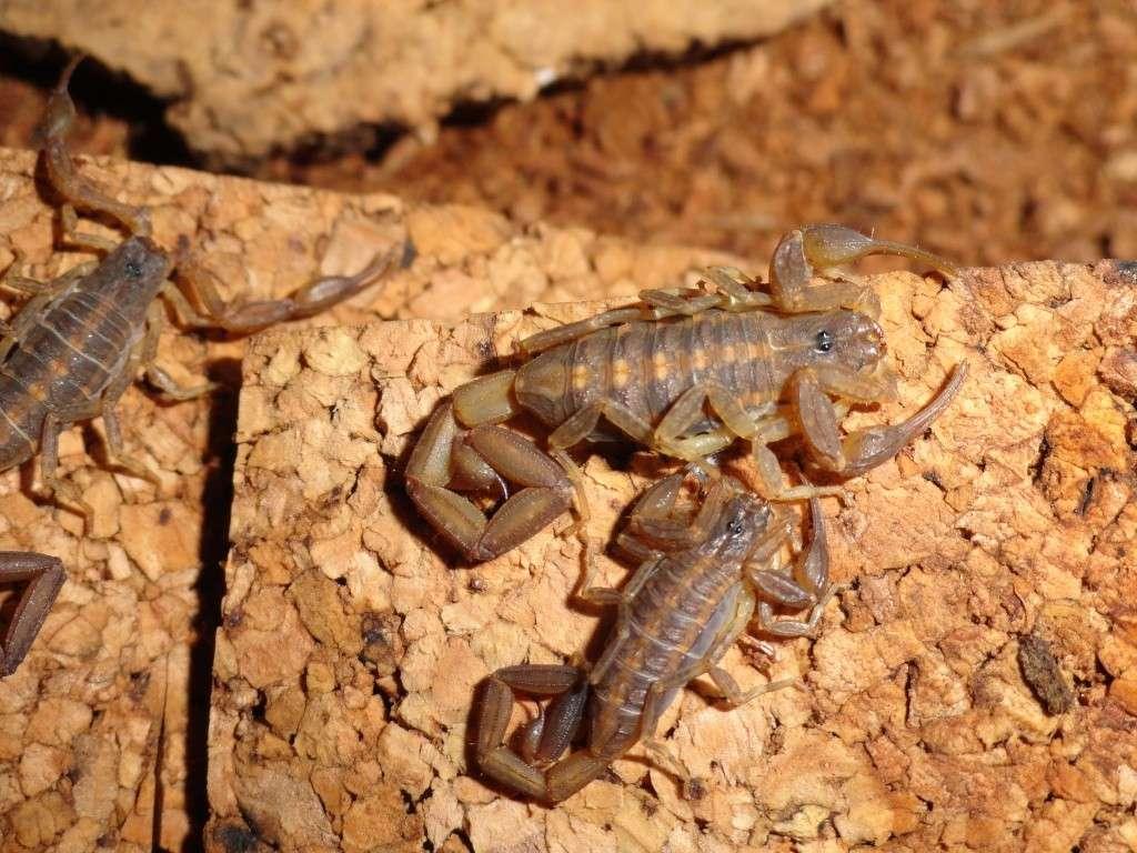 Envyizm's scorpion pictures - Page 4 Dsc00213