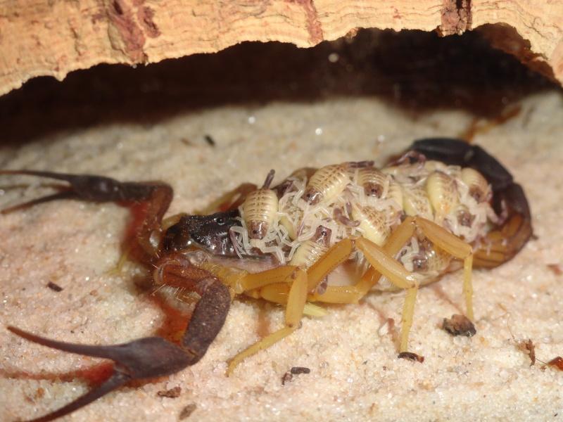 Envyizm's scorpion pictures - Page 5 Dsc00216