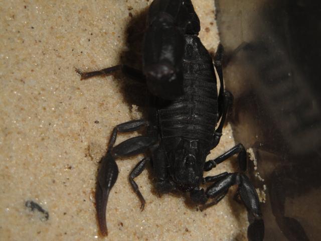 Envyizm's scorpion pictures - Page 2 Dsc06510
