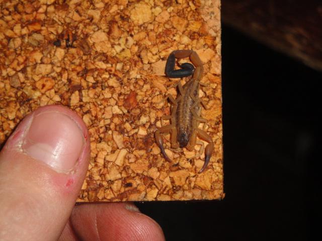Envyizm's scorpion pictures - Page 2 Dsc06511