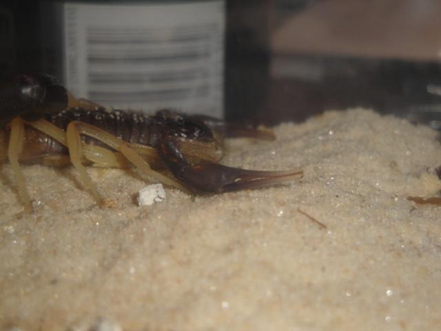 Envyizm's scorpion pictures - Page 2 Dsc06610