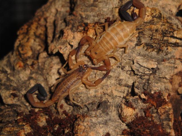 Envyizm's scorpion pictures - Page 3 Dsc06611