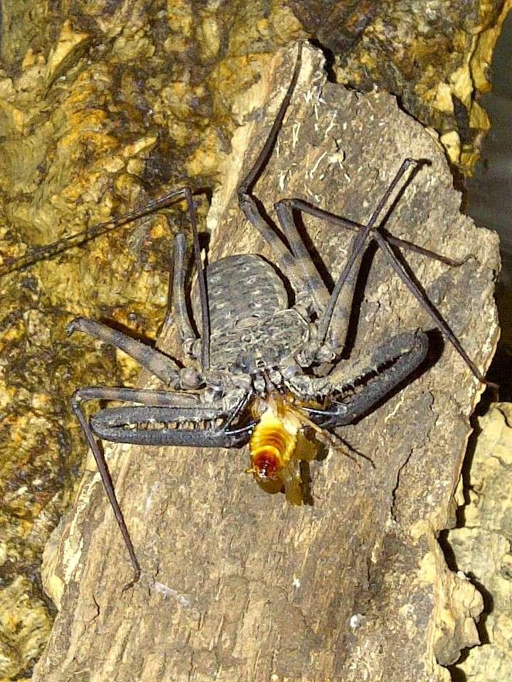 Envyizm's scorpion pictures Img-2015