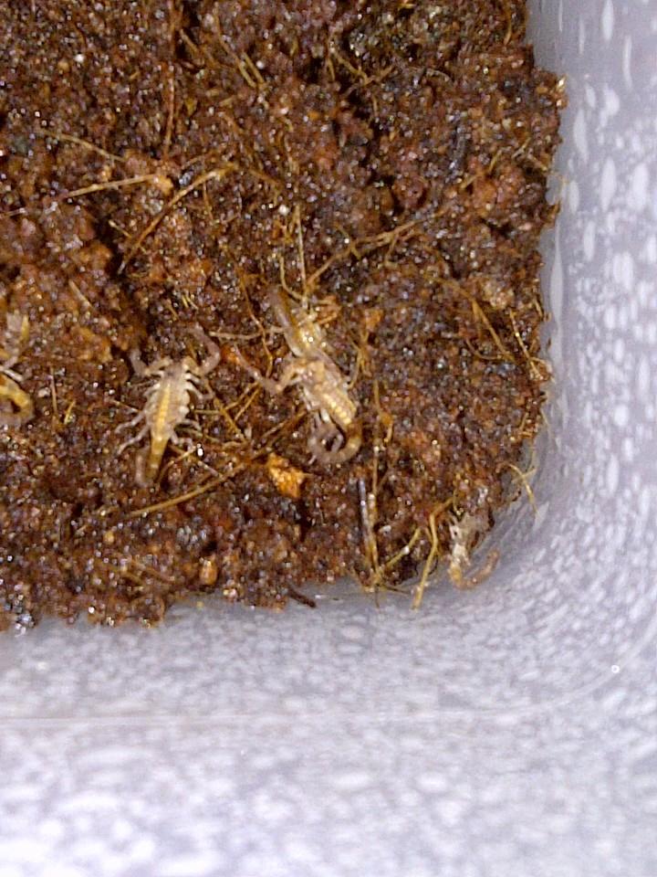 Envyizm's scorpion pictures - Page 2 Img-2022