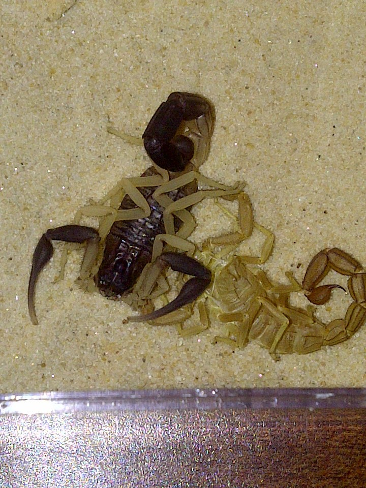 [Sharing] WHO MOLTED TODAY? (Post molting pics here!) Img-2025