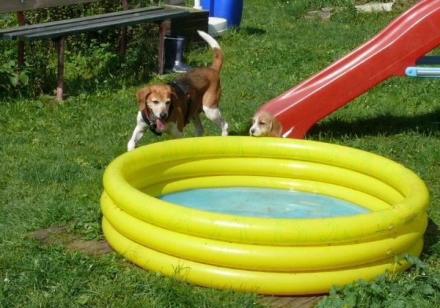 Nouvelles chiens partis le 29 juillet pour l'Allemagne 82740510
