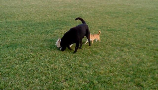 Nouvelles des chiens partis le 9 mai pour l'allemagne et l'autriche - Page 3 Bounty14