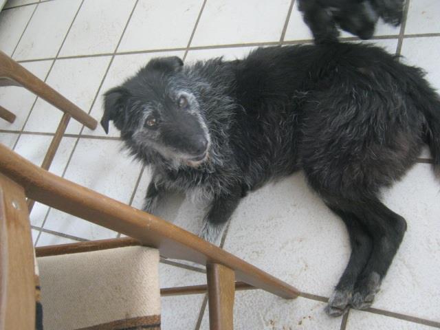 Nouvelle des chiens partis en juin 2012 Chauss10