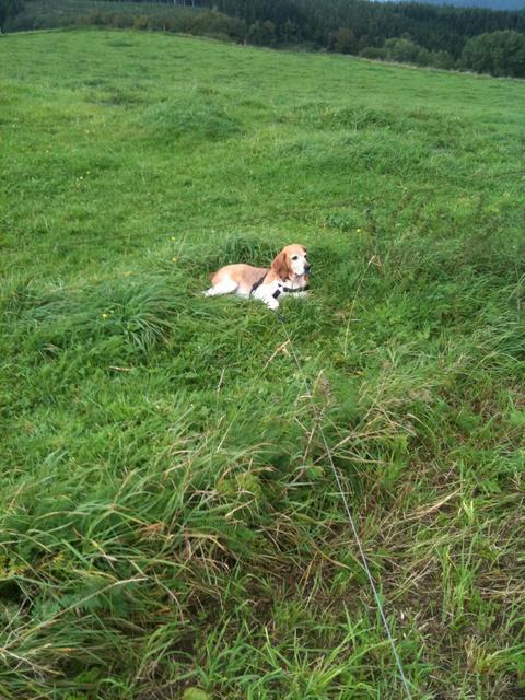 Nouvelles chiens partis le 29 juillet pour l'Allemagne Diana10