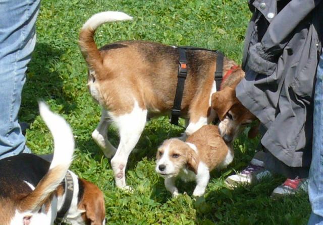 Nouvelles chiens partis le 29 juillet pour l'Allemagne Diana_11