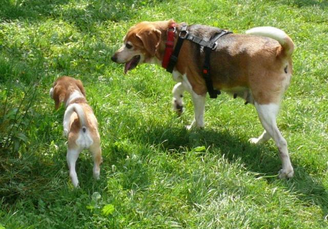 Nouvelles chiens partis le 29 juillet pour l'Allemagne Diana_12