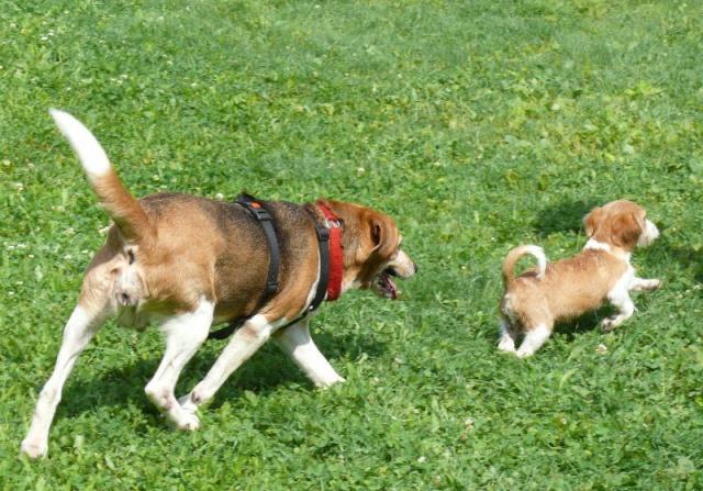 Nouvelles chiens partis le 29 juillet pour l'Allemagne Diana_13