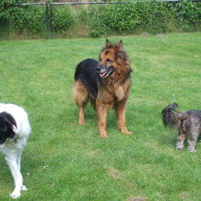 Nouvelle des chiens partis en juin 2012 Erki10