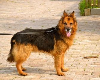 Nouvelle des chiens partis en juin 2012 Erki_610
