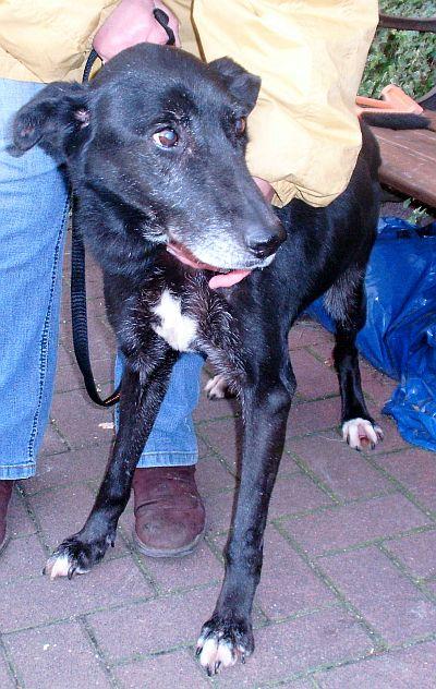 Des nouvelles des chiens partis en novembre 2011 vers l'Allemagne Lousan10