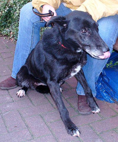 Des nouvelles des chiens partis en novembre 2011 vers l'Allemagne Lousan11