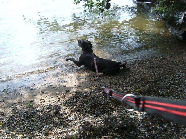 Nouvelle des chiens partis en juin 2012 Nytro10