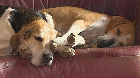 Nouvelles chiens partis le 29 juillet pour l'Allemagne Ramses13