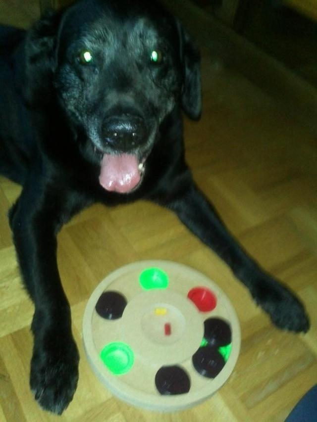 Nouvelle des chiens partis en juin 2012 Sircus11
