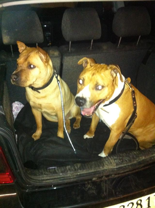 Des nouvelles des chiens partis en novembre 2011 vers l'Allemagne - Page 2 T-rex_10