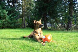 Nouvelles des chiens partis le 9 mai pour l'allemagne et l'autriche - Page 3 Tina210