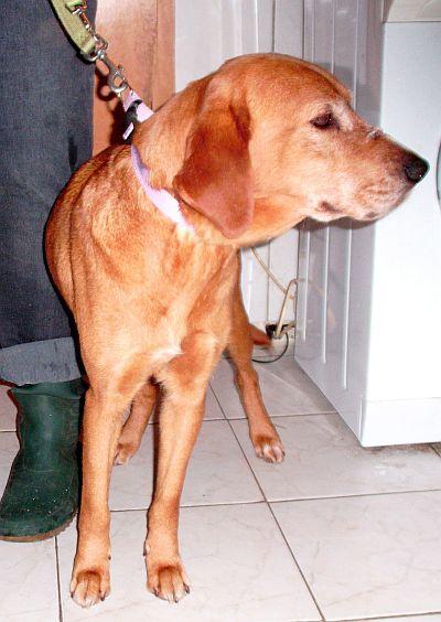 Des nouvelles des chiens partis en novembre 2011 vers l'Allemagne Uta_210