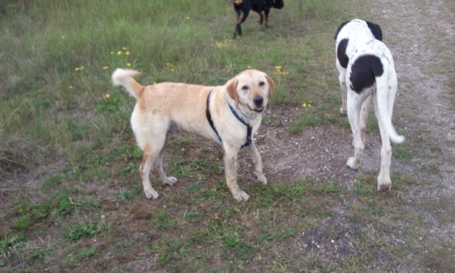 Chiens covoiturage Mornac---> Hauset le 25 JUIN - Page 2 Youpi_11