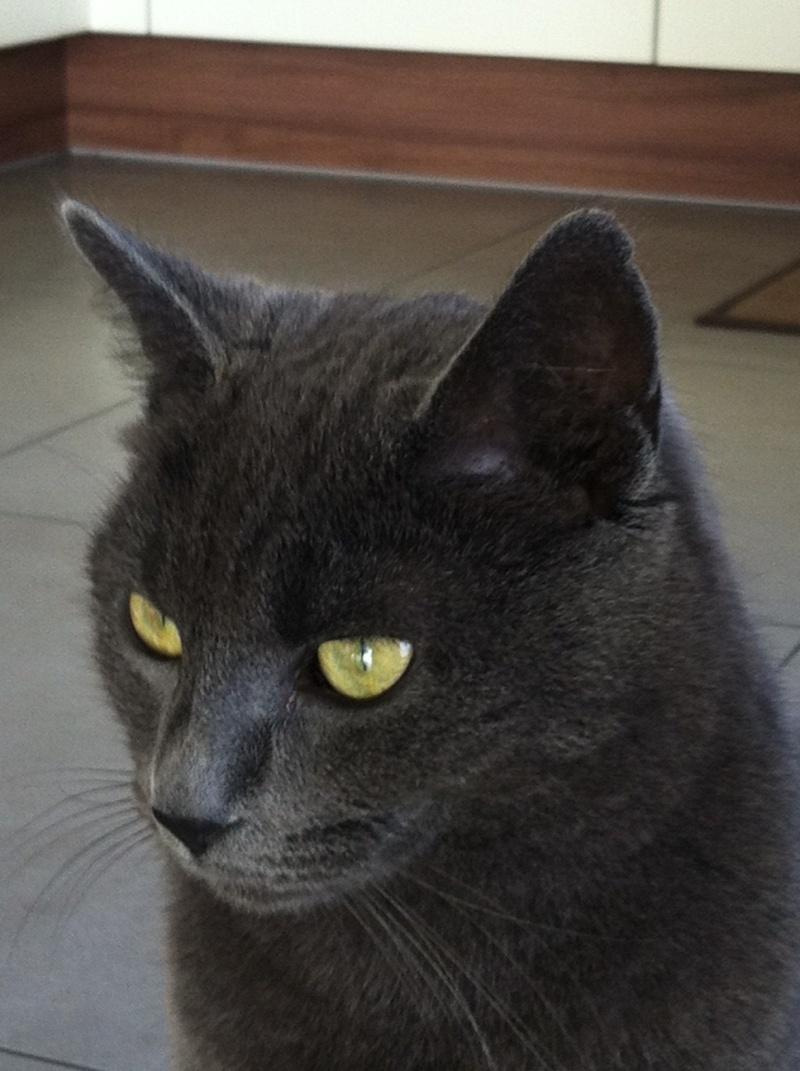 Photos des chats sauvés, avant/après Ash_3112