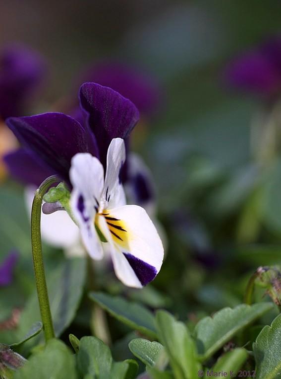 J'ai descendu dans mon jardin ... P3240911