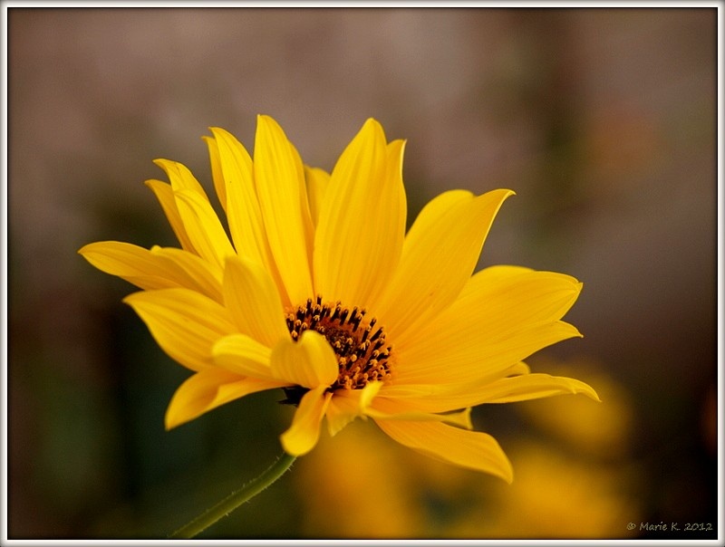 Dernier soleil  P9253010