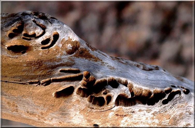 sculpture naturelle sur branche Tronc_10