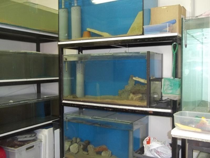 presentation de ma fishroom 102_0765