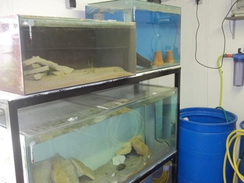 presentation de ma fishroom 102_0767