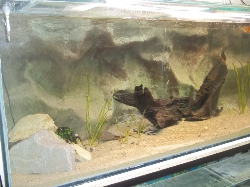 presentation de ma fishroom 102_0771