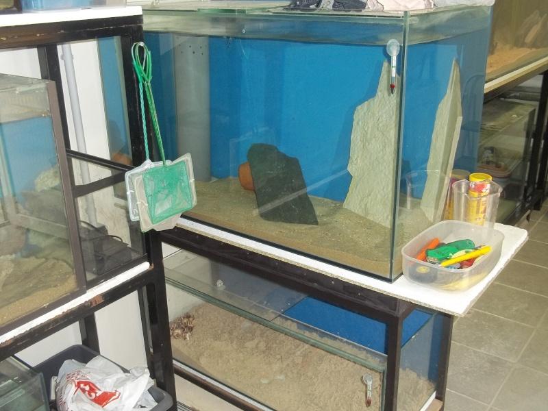 presentation de ma fishroom 102_0773