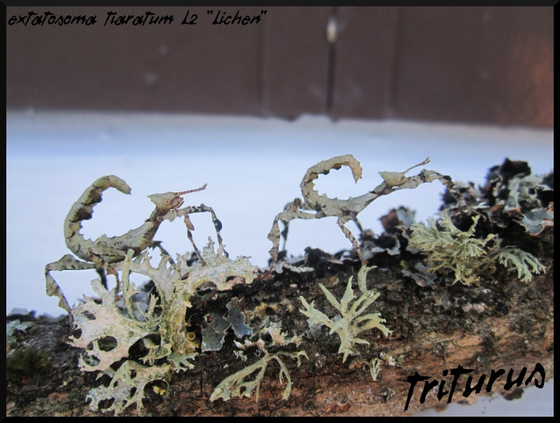 A part les fourmis... Img_4213