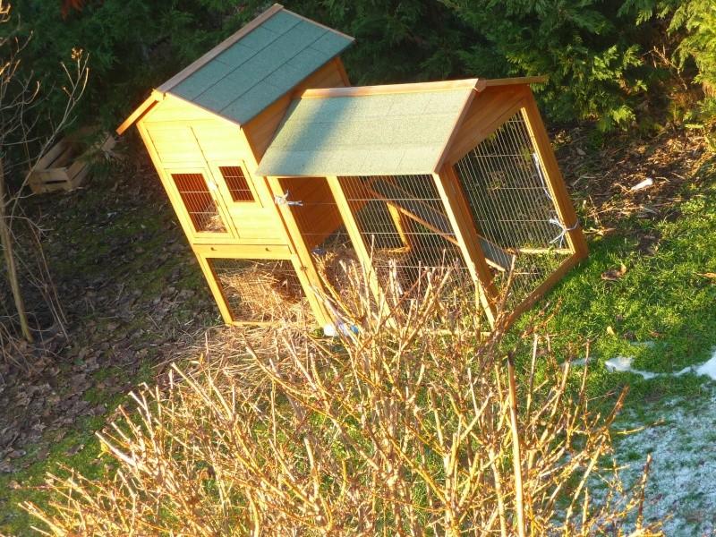 cage à lapins, cochons d'inde ou poules P1240310