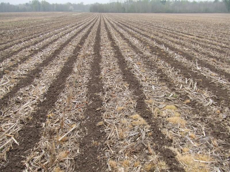 semis de maïs - Page 8 Dscf1235