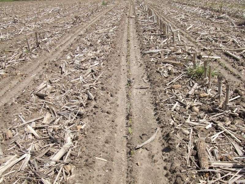 semis de maïs - Page 8 Dscf1318