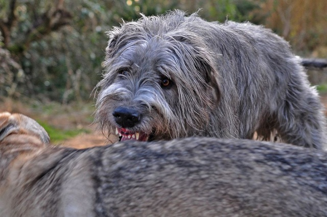 bagarre - Bagarre entre chiens, intervenez-vous ? - Page 2 Dsc_0364