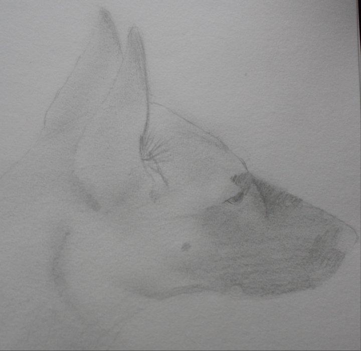 Dessins de chiens - Page 2 73213_10