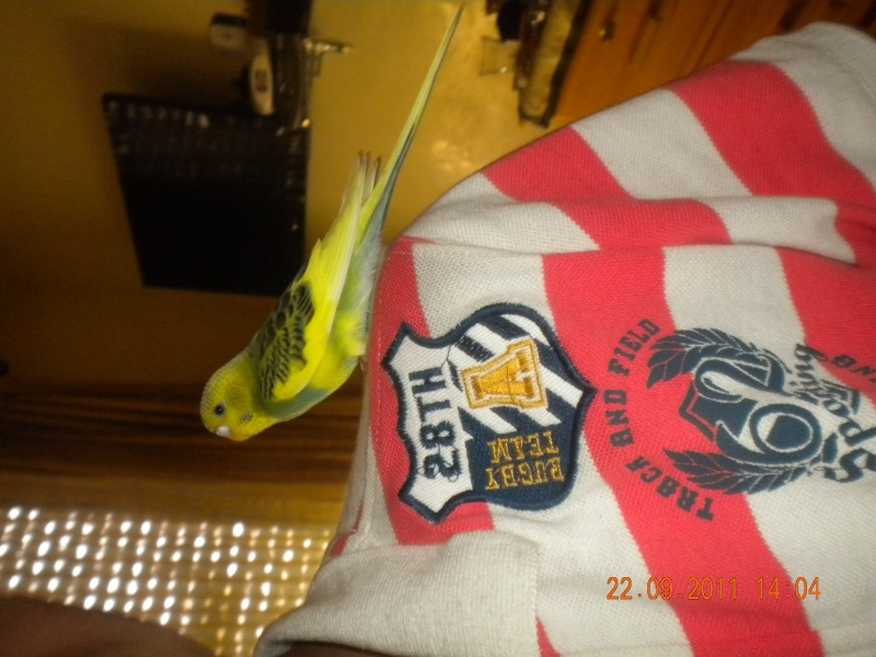 photo de ma perruche ange Dscn2212