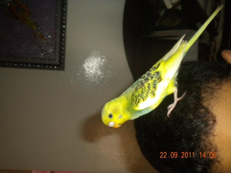 photo de ma perruche ange Dscn2213