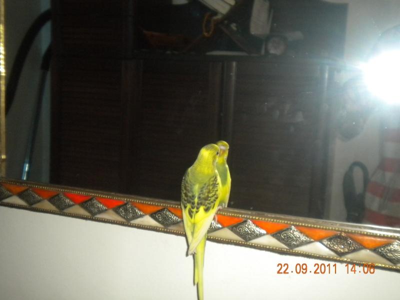photo de ma perruche ange Dscn2215