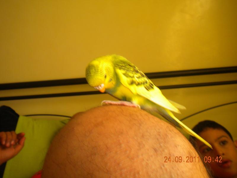 photo de ma perruche ange Dscn2217