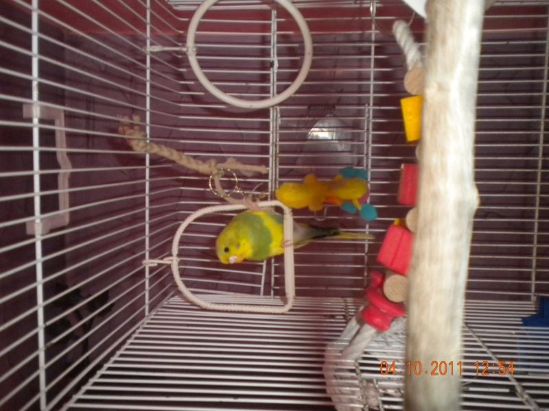 la nouvelle cage de ange  Dscn2310