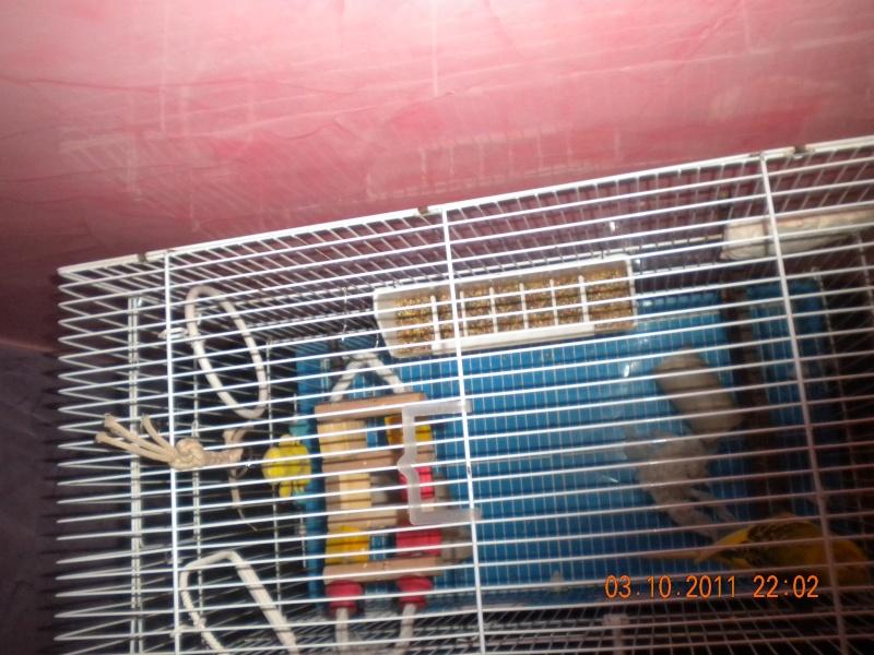 la nouvelle cage de ange  Dscn2312